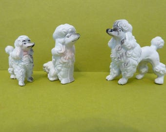 Miniature Poodle Family of 3