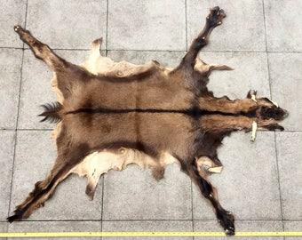 Beautiful Vintage Preserved Goat Pelt Animal Hide Skin Taxidermy