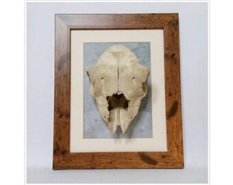 Real framed sheep skull farm animal bones taxidermy nature display wood  Oddities home decor