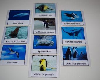 Antarctica--Animals of Antarctica Montessori 3-part cards