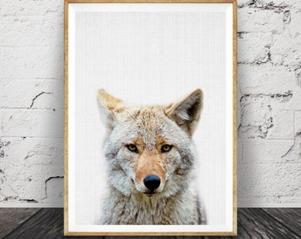 Coyote Print, Nursery Animal Wall Art, Printable Large Poster, Digital Download, Colour Photo,