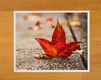 Red fall leaf standing up on sidewalk.