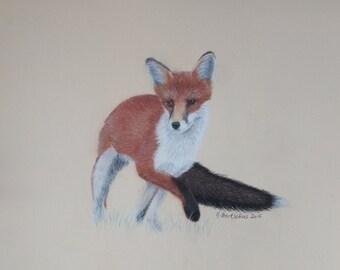 """Picture """"Fox"""" / picture """"Fox"""""""