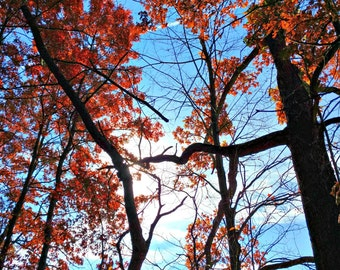 """Autumn Tree Photography, Red Fall Leaves, Orange Leaves, Fall Tree Photo, Fall Decor, Fall Print, Autumn Decor, Blue Sky, 8x10 """"Connecting"""""""