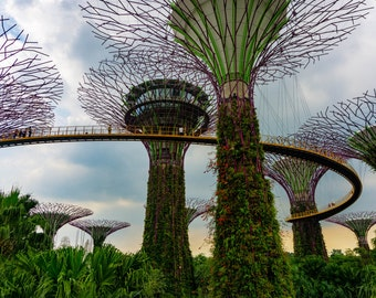 Supertree Grove Singapore, Architecture Landscape Photography, Wall Art Home Decor Colorful