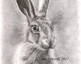 Hare Original A4 Graphite Drawing