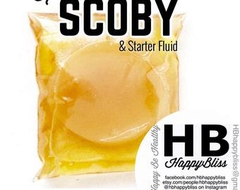 Kombucha SCOBY & Starter Liquid