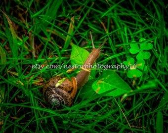 Snail photograph