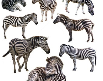 Buy 3 get one free. Zebra Overlays, Separate Png's with transparent backing, High Resolution, Instant Download.