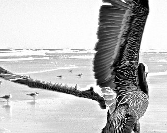 Black and White 5 X 7 Nature Photograph of Pelican in Flight at New Smyrna Beach