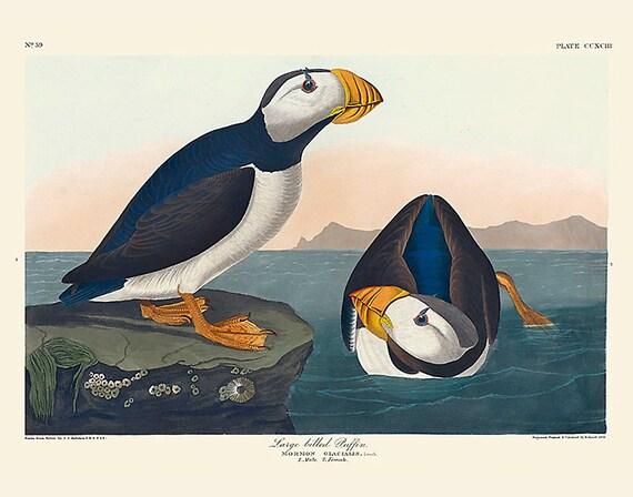 Audubon Bird Art Print, Large Billed Puffin, New Edition Print, Wall Decor, Natural History, Vintage Bird Illustration, Wall Art