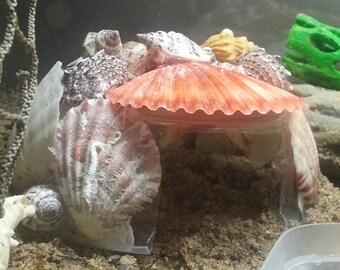 Shell Shack Hut