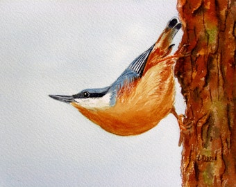 Nuthatch painting original watercolor bird painting 6x8