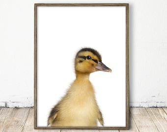 duck print, duck art, baby duck print, farm animal print, baby farm animal, easter print, baby barn art, rustic animal print, printable art