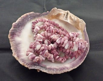 """Lavender 22"""" Spiny Oyster Shell Beads"""