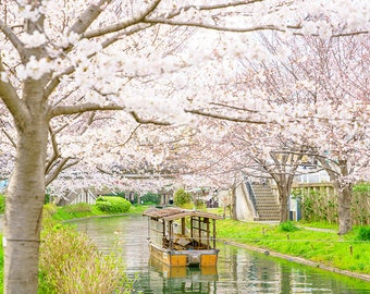 Japan Kyoto nature photography - cherry blossoms - sakura - boat - fine wall art - home decor - zen