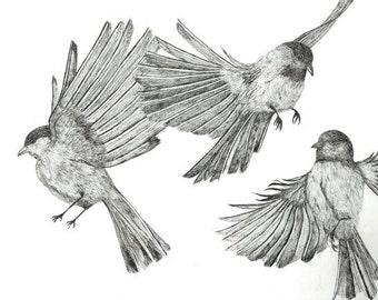 3 birds Print