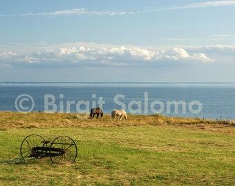 Horses on the sea, photo poster, print on canvas, ALU-Dibond direct printing, original photography