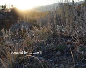 Desert Weeds