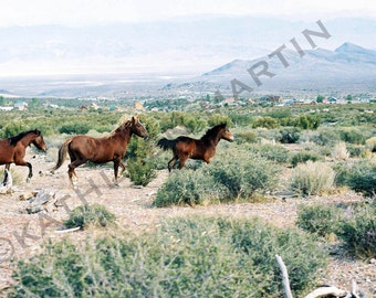 Running Horses Photo Card