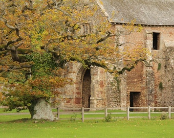 Old Cleeve Abby, England, Farm, Tree, Medieval, Photography, Digital Download
