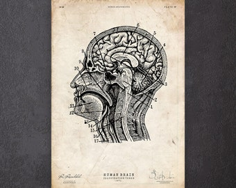 PhD graduation gift Anatomical brain print Neurology poster Medical student gift CA088