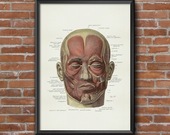 Old vintage Illustrations of Anatomy-Anatomy-medical Prints human face