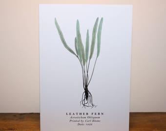 Leather Fern: Greeting Card
