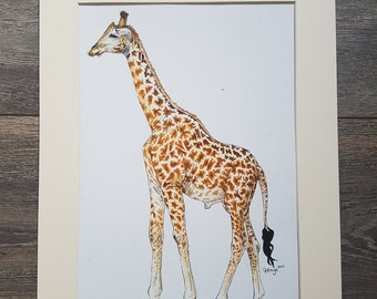 Original Giraffe Painting - Oil and Ink - A4 - African Wildlife - Giraffe Drawing - Illustration with Mount - Charity