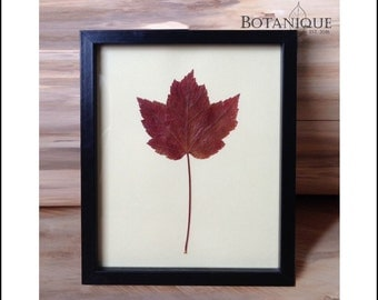 Sugar Maple Leaf
