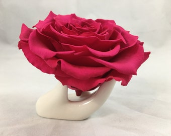 Real Preserved Roses xxl size 11 differents colors