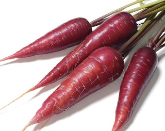 Cosmic Purple Carrot Seeds-Organic-NON-GMO-Vegetable Seeds