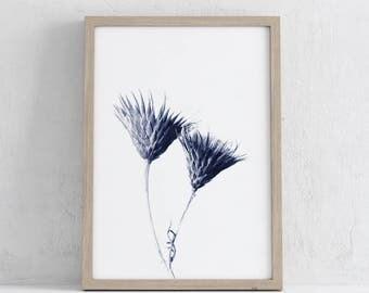 Download of vintage Karl Blossfeldt Botanical photograph, printable art, blue, art, wall prints , photograph, print, graphic, minimal