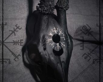 "Carved Skull ""Vegvisir"""