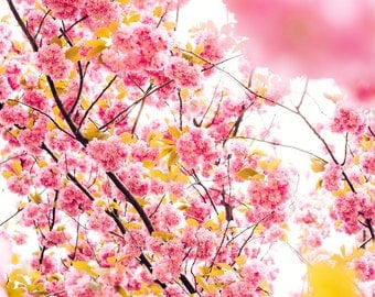 CHERRY BLOSSOM Removable Wall Mural - Purchase by the roll