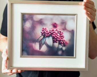 Original Framed Photo Print 37cm x 32cm  ''Winter Berries'' Author ''Tadas Zvinklys'' 2017-January