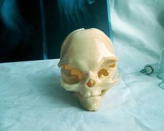 Mini alien skull