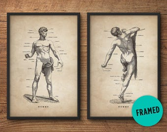 Framed anatomy print set of 2, Framed art, Anatomy posters, Anatomy home decor, Anatomy illustrations, Human male, Medical student gift