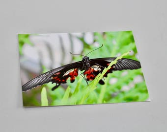 Red Helen, red and black butterfly postcard, A6 (glossy)