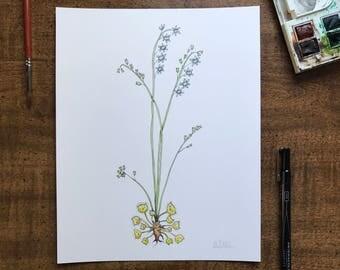 Sundew Cat Botanical Giclée Print