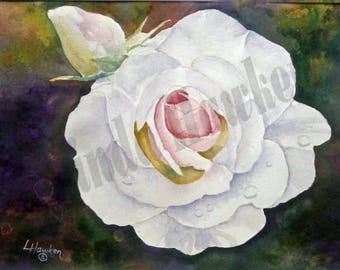 White Irish Rose