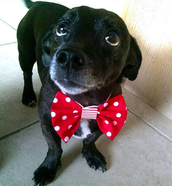 Pet Dog Bow Tie : red and white polka dot Cat collar