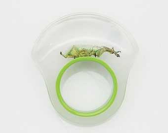 Funky green lucite ring with real beetle