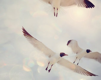 Fine Art Print, Seagulls, Bird Print, Flying, Beach Art, Sun flare, Pale Blue, Virginia Beach Art, Nature Print, Seagull Photo, Wall Art