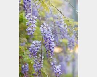 Wisteria Photo, Purple Flower Photo, Wisteria Art, Floral Wall Decor, Wildflower Photo, Purple Floral Decor, Lavender Floral Art, Flower Art