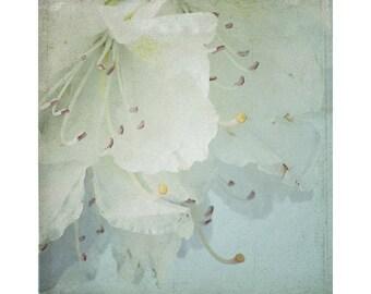 Azalea Photograph,  Mint Decor,  White Flower Photography, Pastel Wall Art, Flower Art, Bedroom Decor