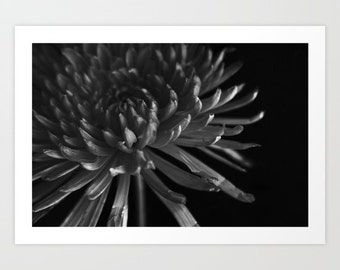 modern floral black and white photography- minimalist chic home decor- wall art- feminine bedroom decor- nature photography- wall prints