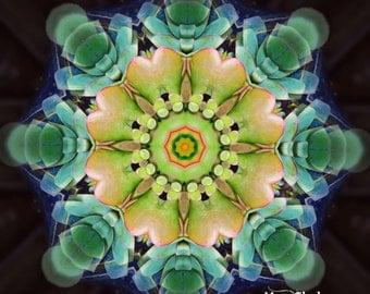 Succulent Dreams - Mandala photography Graphic art altered photograph zen yoga meditation
