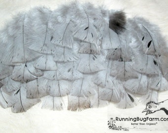"""Turkey Feathers Real Bird Feathers Loose Feathers For Crafts Natural Feathers Blue Slate Turkey Feathers Real Feathers 25 @ 3 - 3.5"""" / BS9"""