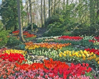 Tulip Hill Flower Garden at Keukenhof Gardens Lisse Zuid Holland Netherlands Dutch Tulips Original Fine Art Photography Wall Art Photo Print